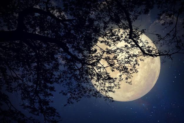 夜の空、満月と古い木の中の天の川の星 - ヴィンテージ色調のレトロなスタイルの作品(nasaが提供するこの月の画像の要素)