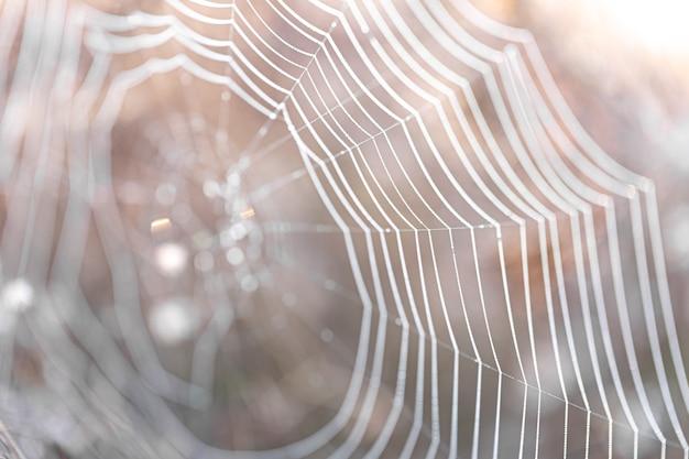 햇빛에 거미줄과 자연 추상적인 배경입니다.