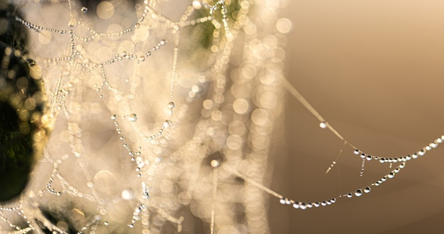 Natural abstract background with crystal dew drops on a spider web in sunlight.