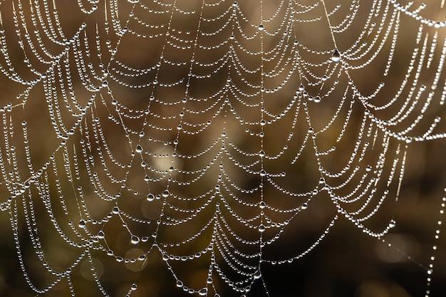 蜘蛛の巣に輝く水滴のある自然な抽象的な背景。