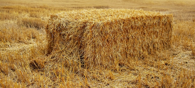 자연 농업 배경입니다. 필드에 마른 건초 더미의 근접입니다.