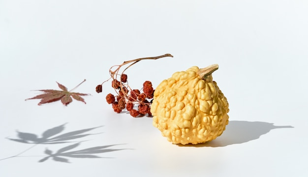 自然な秋の装飾。カボチャ、マルメロ、ドライナナカマドベリー。