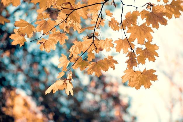 푸른 하늘에 석양이 비치는 나뭇가지에 자연 가을 단풍