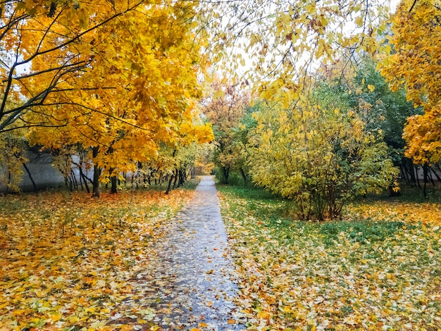 Natural autumn. path in park with fallen-down foliage. russia.