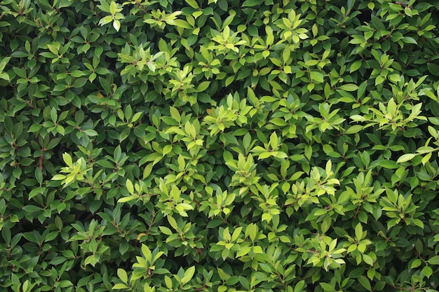 The natural backdrop nature green leaves design