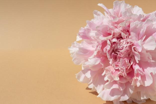 自然な背景の牡丹の花のつぼみ