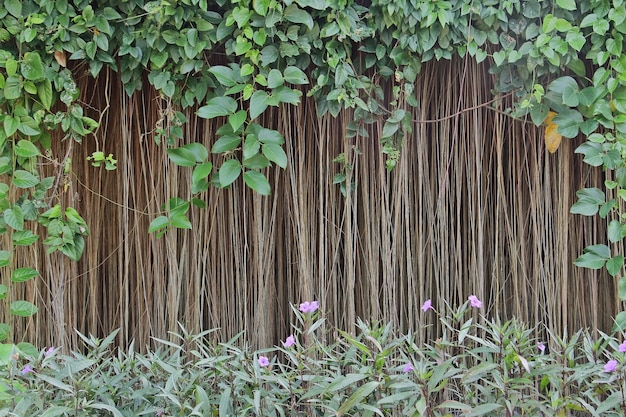 Natural backdrop with green leaves, air roots of banyan tree and ruellia tuberosa purple