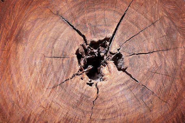 Естественный фон. разрез ствола красного дерева