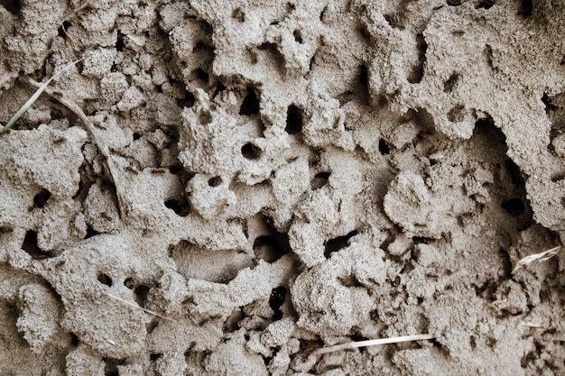 Natural background of anthill in a sand