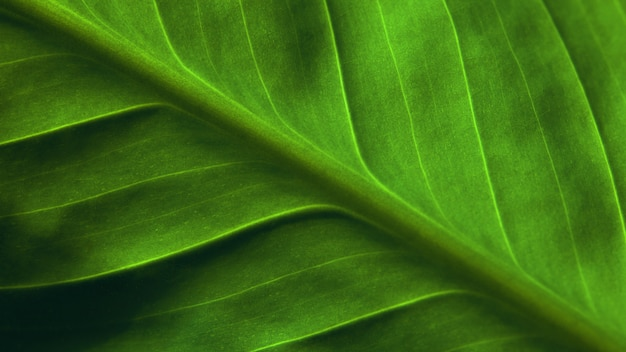 Natural background. bright green leaf of plant close up. invoice.