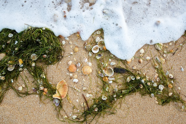 Natural background of different seashells and algae on wet sand beach. view from above.