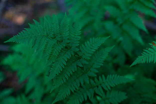Естественный фон, ветка папоротника в лесу на фоне заката.