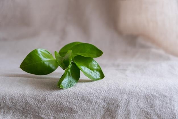에코 제품에 대한 자연 배경입니다. 린넨, 녹색 식물, 연단. 에코 컨셉