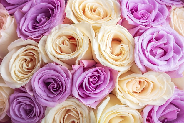 Natural background of fresh amazing white and purple roses for wallpaper, postcard, cover, banner. wedding decoration. beautiful bouquet of roses as gift for