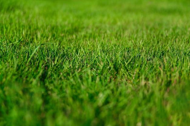 Естественный фон свежая трава на лужайке крупным планом