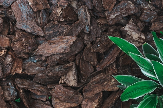 Natural background from brown pieces of wood chips from pine bark Premium Photo