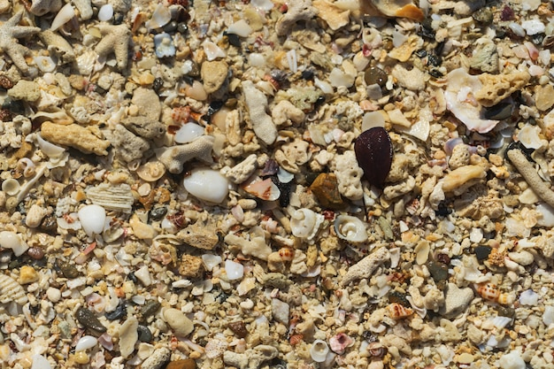 Natural background from different seashells, photographed from above.