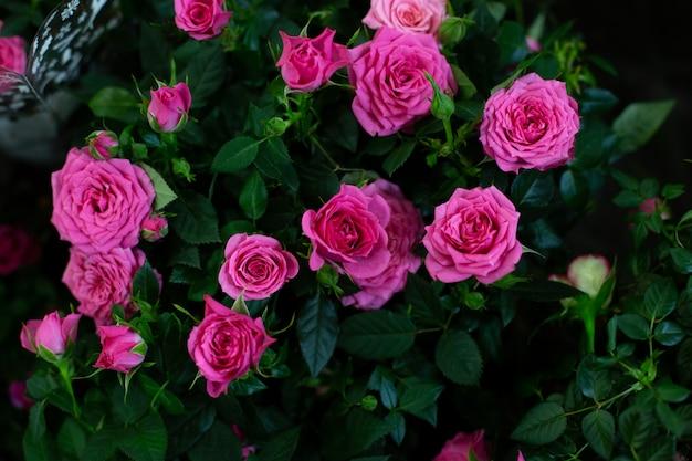 Естественный фон из цветов.