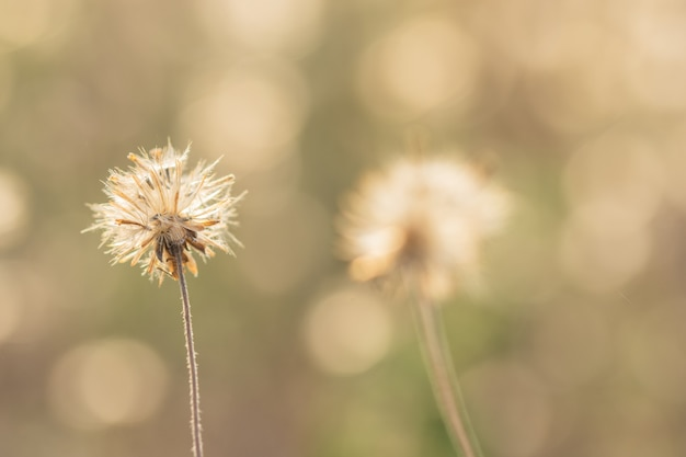 Natural background from grass flowers