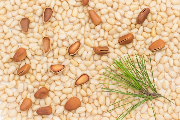Natural background from pine nuts and brown cedar shell.