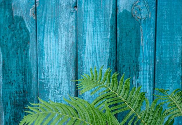 Естественный фон зеленые листья папоротника на фоне синей деревянной текстурированной стены копией пространства