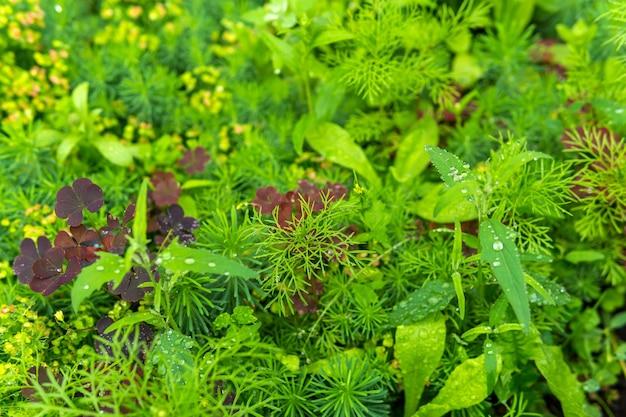 自然の背景-雨の間にさまざまな草が茂った植物のある牧草地がクローズアップ