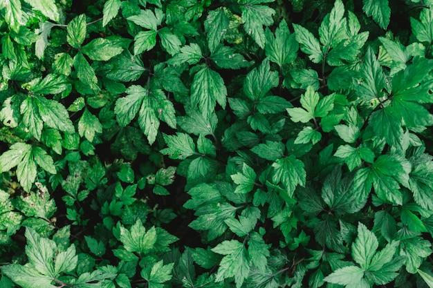 빈티지 필터와 녹색 잎의 자연 배경