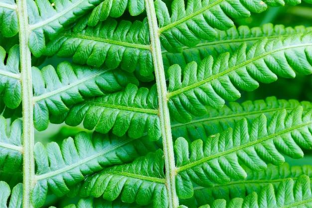 シダの葉の自然な背景