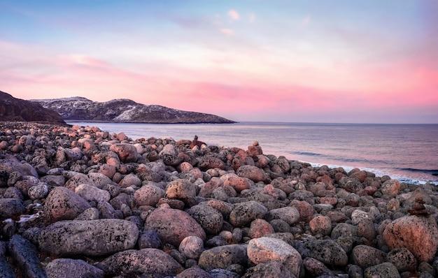 海岸の小石の自然な背景 Premium写真