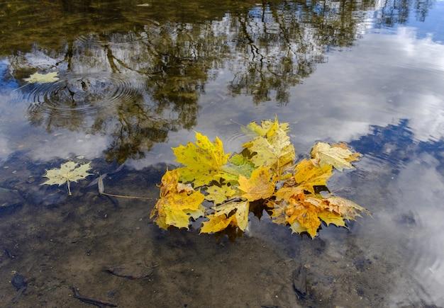 노란 단풍의 자연 배경은 강 수면에 나뭇잎