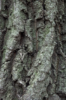 Natural background of old tree bark. the texture of the tree bark is similar to the texture of rocks. wooden background to fill web page or graphic design