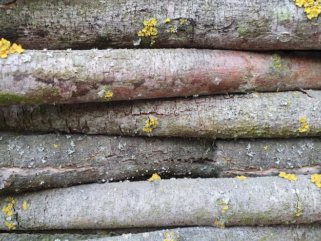 Natural background of old wood close up
