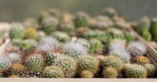 따뜻한 집에서 사막 종류의 선인장이 자라는 자연 배경