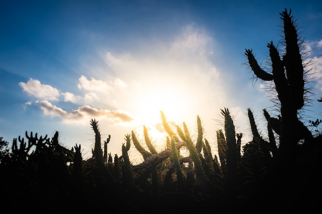 Natural background with cactus silhouette against the blue sky and intense sun.