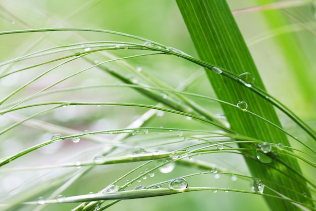 Natural background with green grass in rain drops in summer morning