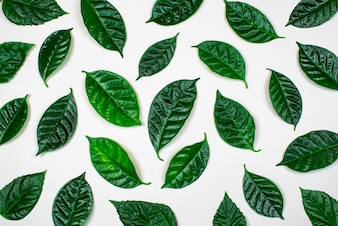 Natural background with green leaves isolated on white background.