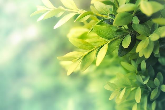 녹차 잎 자연 배경