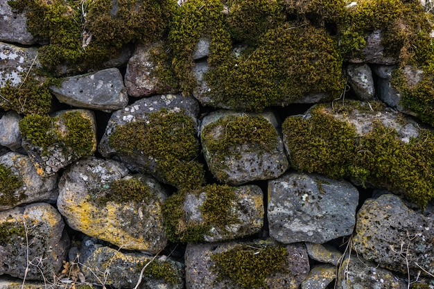 Естественный фон с камнем и мхом