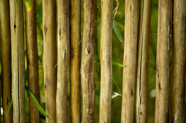 Natural bamboo fence, background