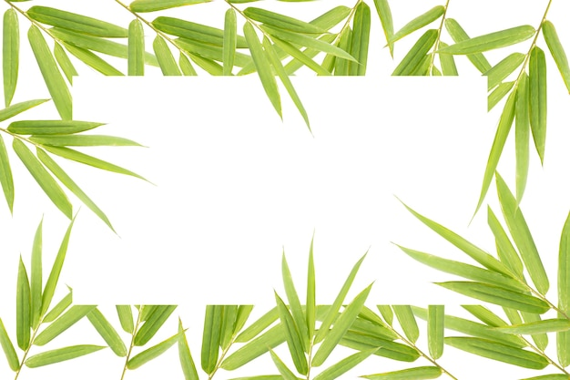 Natural bamboo leaves spa or beauty banner template with text place