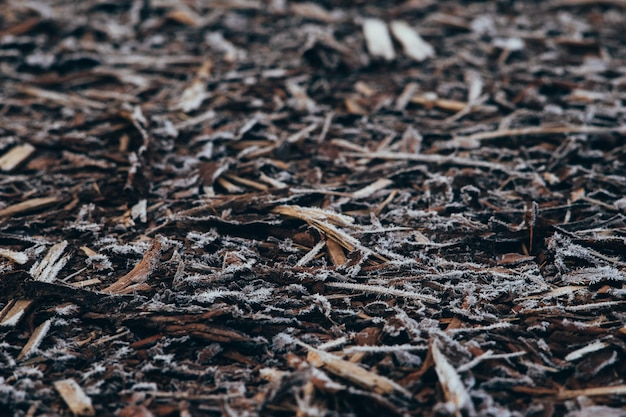 Natural bark covered by morning frost