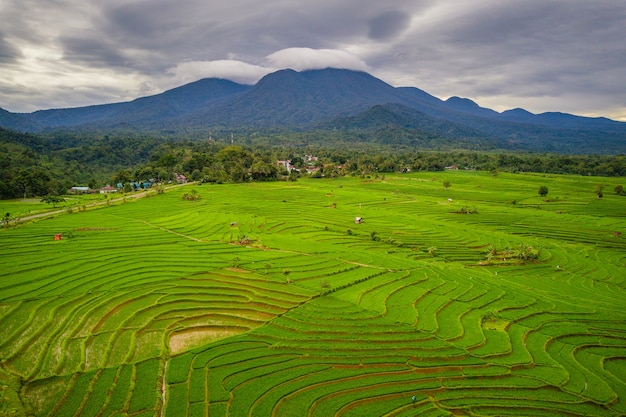 The natural beauty of the expanse of rice fields with blue mountains of leaf hills in north bengkulu, indonesia