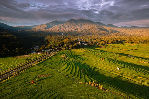 The natural beauty of rice fields with blue mountains in indonesia