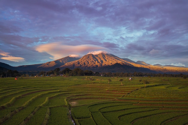 The natural beauty of rice fields with blue mountains in north bengkulu, indonesia