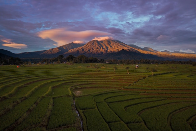 The natural beauty of rice fields with blue mountains
