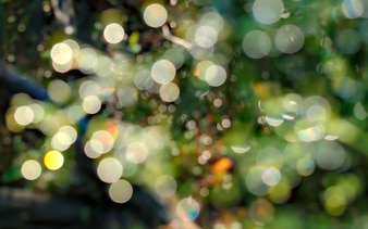 Natural bokeh background with forest plants and dew.