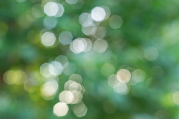 Natural bokeh background with green leaves of trees and sky.