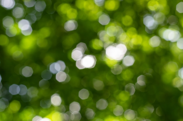 Natural bokeh background with leaves, trees and sky.