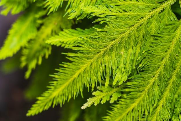 Natural bright green plants leaf