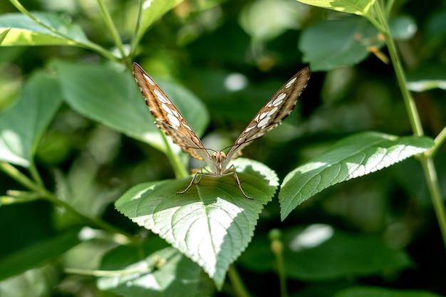 자연 나비 잎에 앉아 카메라를 직접 보고